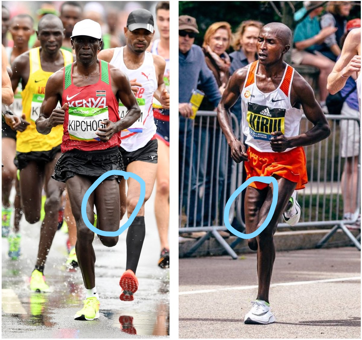 Morphological and biomechanical traits of world class distance runners